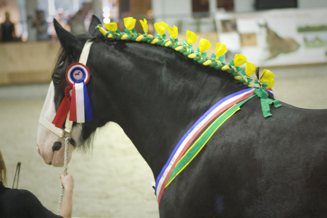 Shire Horses Show The Photo Impression